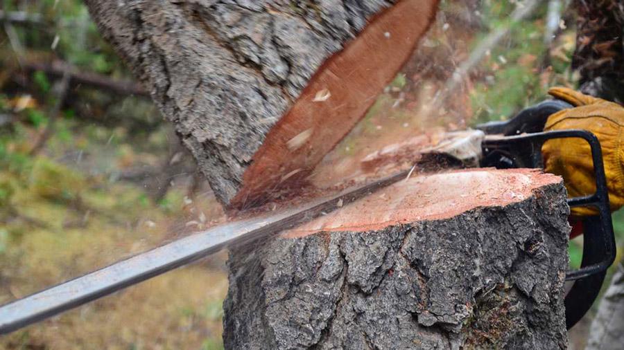 tree-cutting